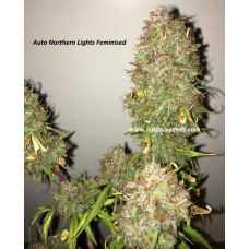 Auto Northern Lights regular