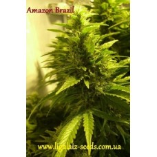 Amazon Brazil reg. / Ligalaiz Seeds