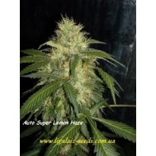 Super Lemon Haze Auto CBD reg. / Ligalaiz Seeds