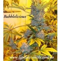 Bubblelicious reg. / Ligalaiz Seeds