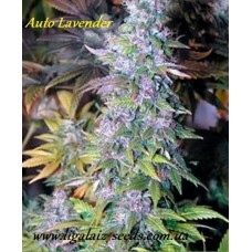 Auto Lavender Regular / Ligalaiz Seeds