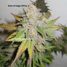 Auto Orange Africa Exclusive