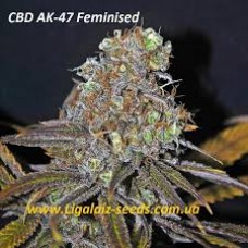 CBD AK-47 Feminised / Ligalaiz Seeds
