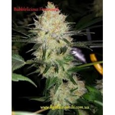 Bubblelicios Feminised / Ligalaiz Seeds